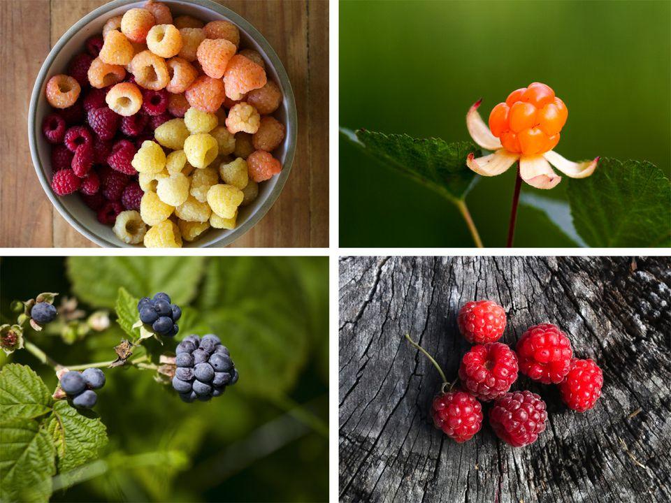 berry-guide.jpg