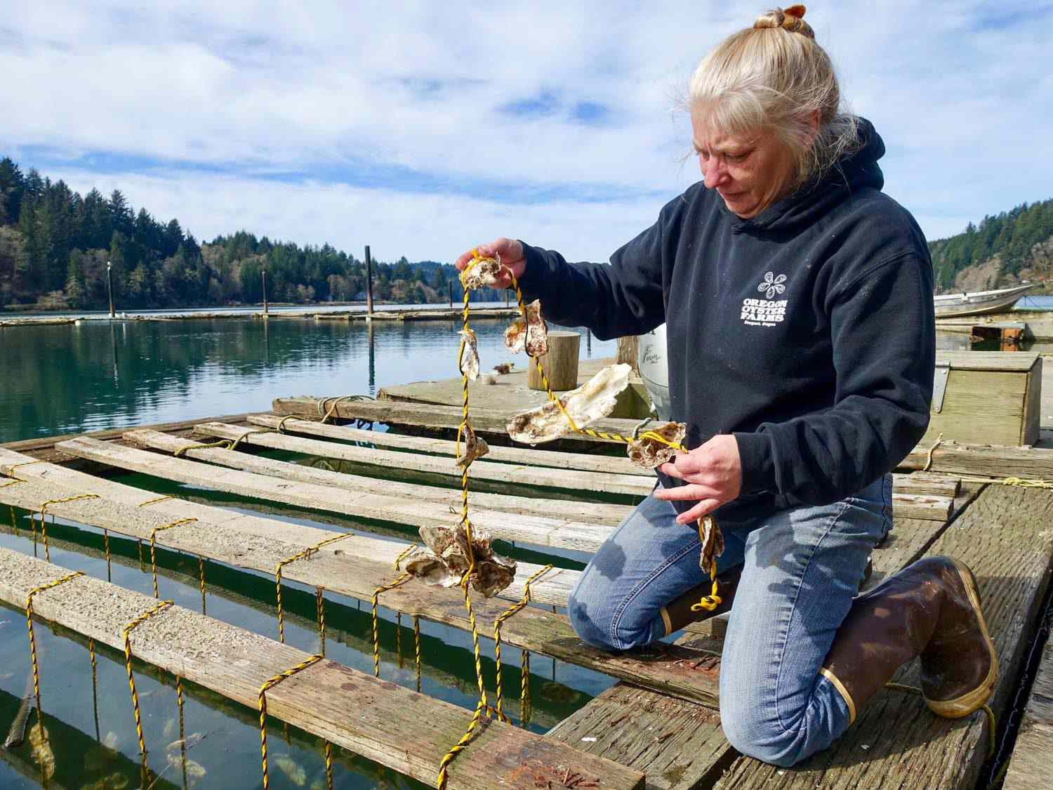 A woman in a blue hoodie kneeling on wooden slats, pulling up a cluster of oysters on a rope