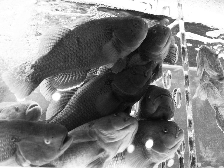 20141014-fish-max-falkowitz.jpg