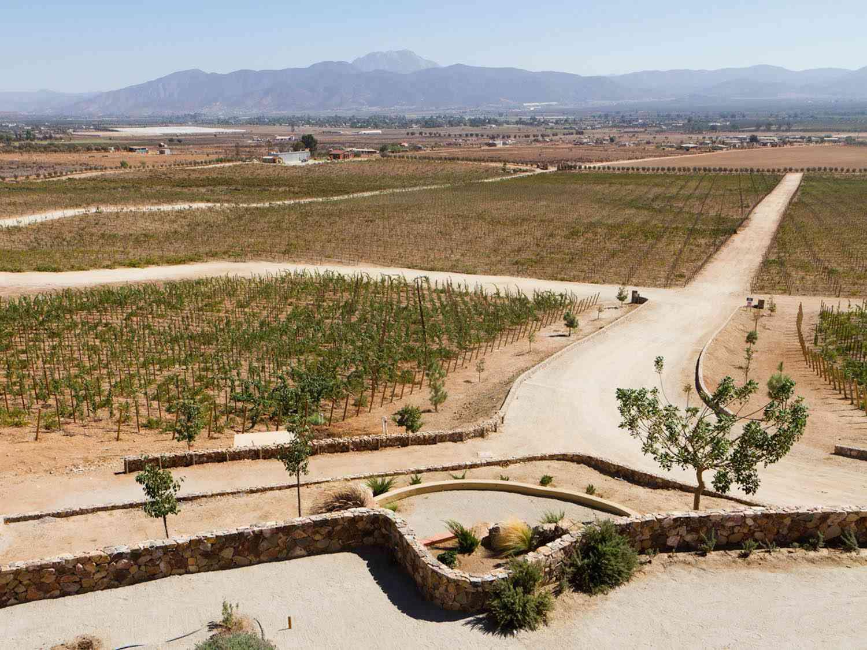 20141102-valle-guadalupe-las-nubes-vineyard-clay-larsen.jpg