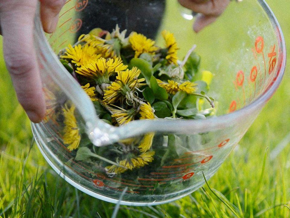 dandelion-science-friday-edit.jpg