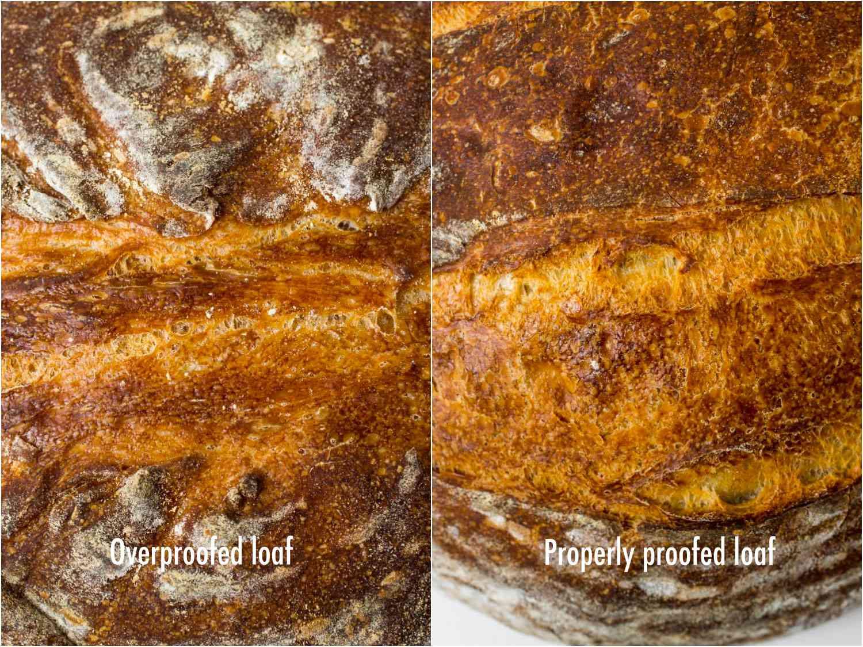 bread-autopsy-scoring-text-EDIT.jpg