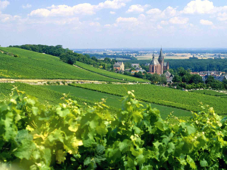 Rheinhessen_Oppenheim.jpg