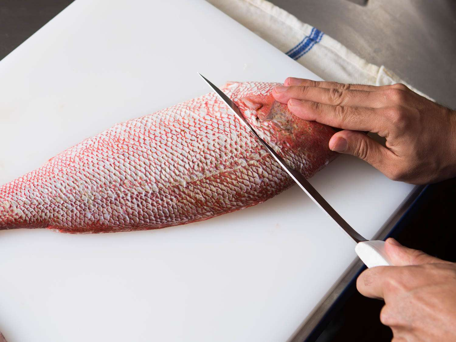 20150922-how-to-fillet-fish-12.jpg