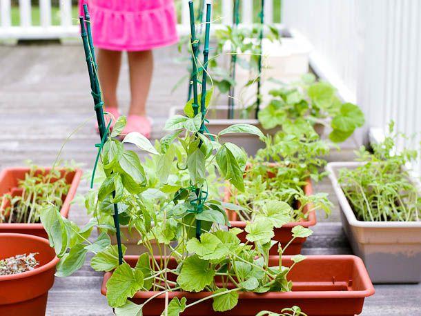 20110301-139907-vegetable-garden.jpg