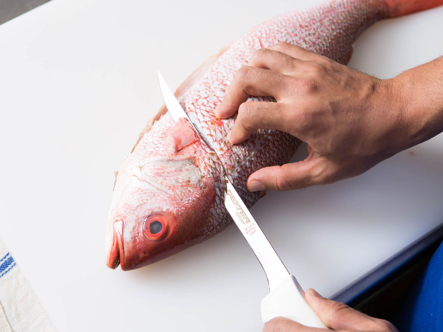 20150922-how-to-fillet-fish-5.jpg