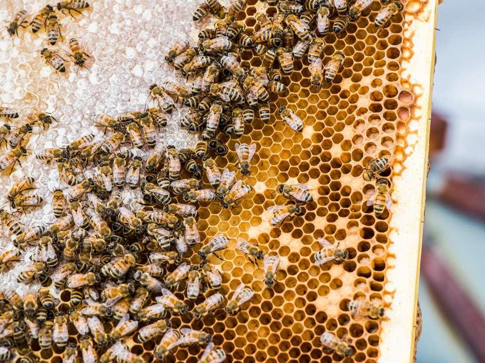 20170717-beekeeping-brooklyn-valery-rizzo-5.jpg