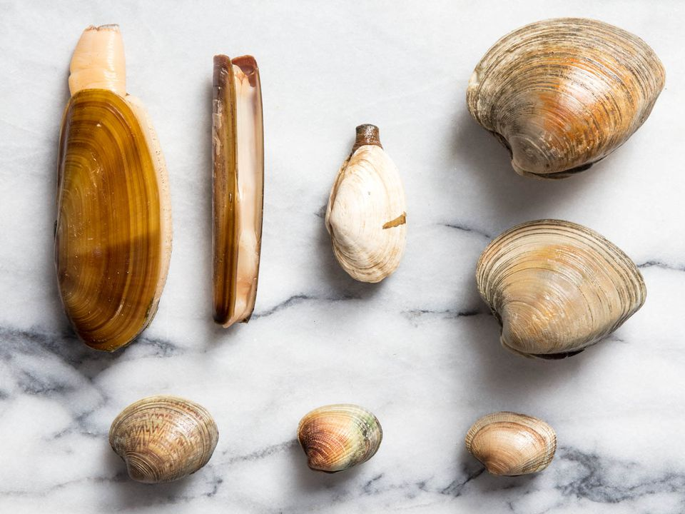 20180327-clam-guide-vicky-wasik-group
